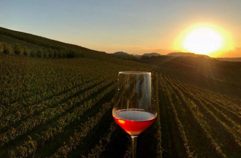 Pôr do sol no vinhedo em Gramado